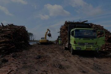 Kegiatan lansering kayu ke pabrik pengolahan kayu